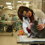 Small animal resident Dr. Belle Nibblett examines a feline patient in the ICU area of the WCVM Veterinary Teaching Hospital.