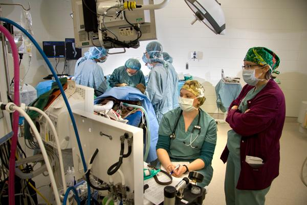 A clinical team performs orthopedic surgery on a canine patient in one of the renovated small animal surgery suites at the WCVM Veterinary Teaching Hospital.