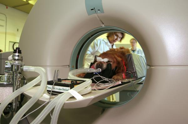 Medical imaging supervisor Debbie Paisley watches as a canine patient undergoes a CT (computed tomography) scan in the Western College of Veterinary Medicine's Veterinary Teaching Hospital.
