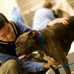 he veterinary school's Oncology Service offers compassionate and comprehensive care utilizing cutting-edge diagnostic procedures and provides treatment for all types of cancers in dogs and cats.