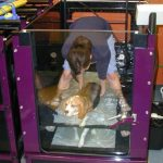 The Veterinary Medical Teaching Hospital employs a certified canine rehabilitation practitioner who designs individual physical therapy programs for animals.  This program might include therapeutic exercise, electrical stimulation, manual therapy