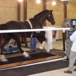 Faculty members at the Marion duPont Scott Equine Medical Center test a new high-speed digital video system.