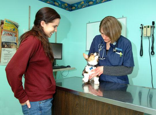 A fourth-year DVM student (right) evaluates a patient in the Veterinary Teaching Hospital.