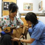 Diana Hazel Tang, left, and Kristin Rocowicz, both in Western University's Class of 2012, do a wellness check on a dog at the Banfield Veterinary Clinical Center.