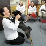 Oakley, a 1-year-old dog owned by DVM student Danielle Bergan, left, is observed by other students during a behavioral session at the Hill's Wellness Center