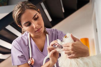 Tuyển dụng thực tập sinh thú y