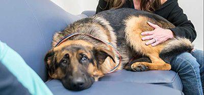 Rex and Karen Silverman ONLINE - Veterinary Practice News