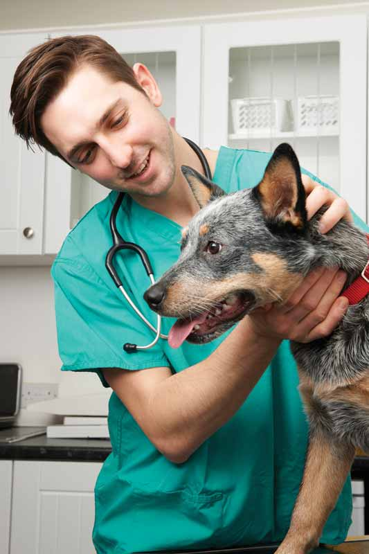 Conquer compassion fatigue once and for all - Veterinary ...