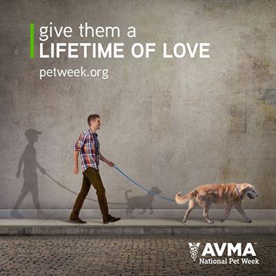 Social Media for Veterinary Professionals