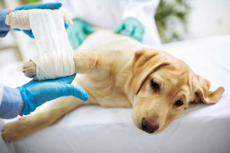 Is tramadol an effective analgesic for dogs and cats