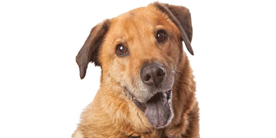 Caring for the geriatric pet - Veterinary Practice News