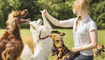 Help clients who travel hire the best professional pet sitter