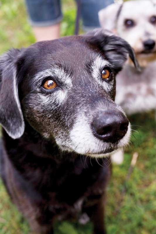 Photos courtesy Lap of Love Veterinary Hospice