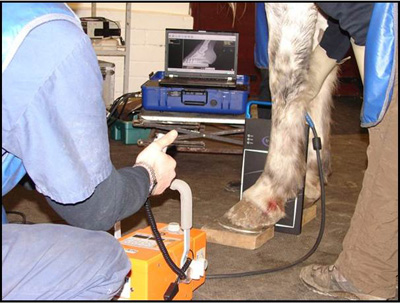 Avma Seeks Input On Equine Diagnostic Imaging Specialty