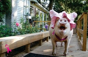 Photo courtesy Twitter/EstherThePig
