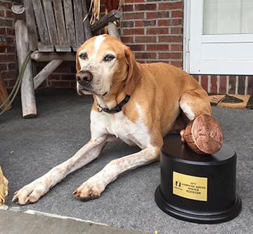 Nationwide Pet Insurance Opens 2018 Hambone Award Voting