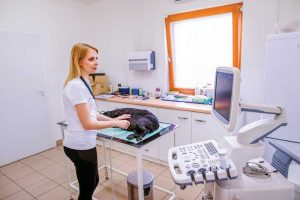 The growing popularity of in-house diagnostic equipment