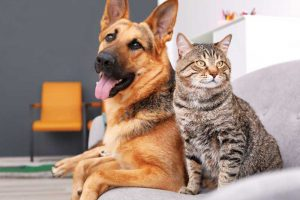 Is Cancer Increasing In Cats And Dogs