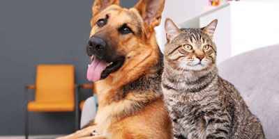 Is cancer increasing in cats and dogs? - Veterinary Practice