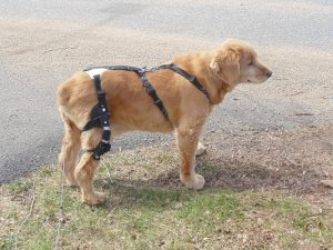 best brace for dog with torn acl