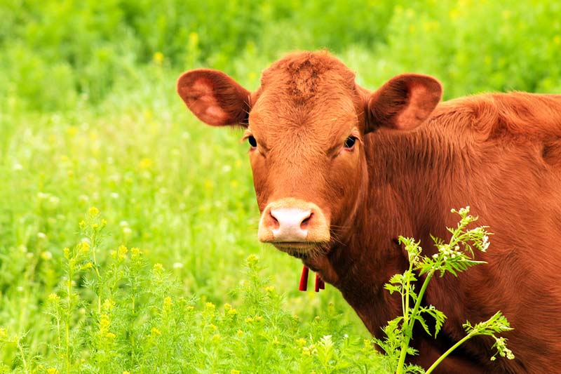 The U.S. House of Representatives passed an agricultural bill, which increases annual funding for the veterinary medicine loan repayment program (VMLRP) from $8 million to $9 million.
