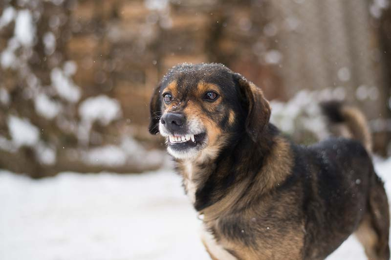 Clinical animal behaviourists should strive to help dog owners feel confident in their behaviour modification techniques, research shows.