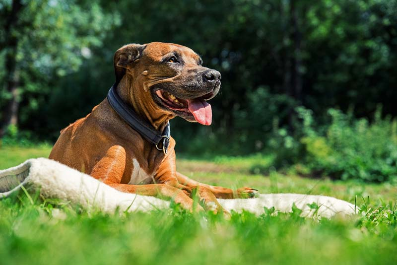 Nationally, prevalence rates for heartworm have steadily risen in the last five years and are up 20 percent from 2013 levels, CAPC reports.