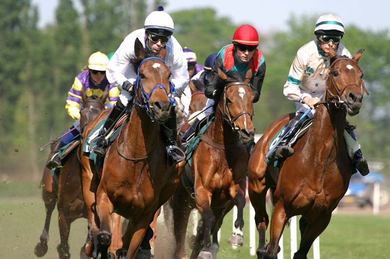 The <i>Horse Racing Integrity Act</i> aims to ban the use of furosemide, a diuretic administered to race horses before races to prevent bleeding in the lungs.