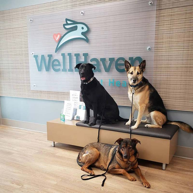 WellHaven Pet Health announced the opening of 12 new American Animal Hospital Association- (AAHA-) accredited hospitals.