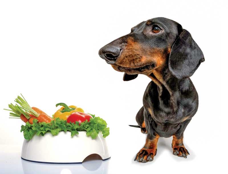 mammalian meat free diet