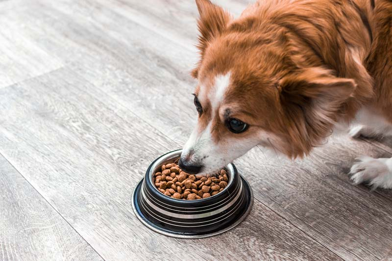 Sixteen pet food brands have been identified as most frequently cited in DCM cases reported to FDA.