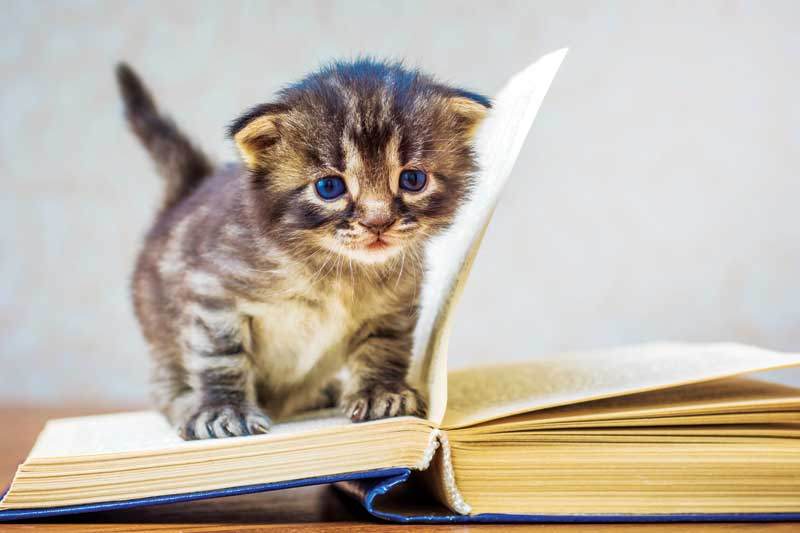 Kitten classes: The cat's meow - Veterinary Practice News