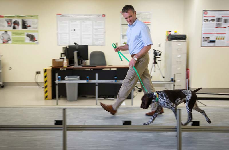 Duncan Lascalles monitors a young dog's agility and movement.