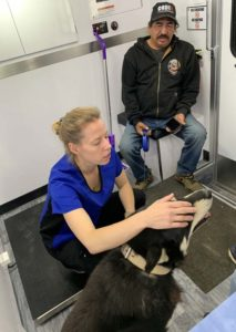 Veterinarian Julia Hughes assessing a dog in Wiikwemkoong.
