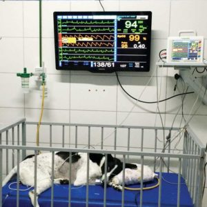 Multiparameter monitors aid veterinary surgeons with patients who experience prolonged recovery.