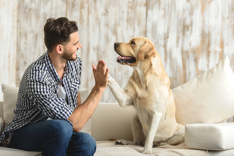 Can pets be infected with COVID-19?
