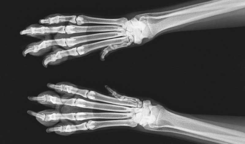 Using digital radiographs is a good way to show clients why you've come to a certain diagnosis.