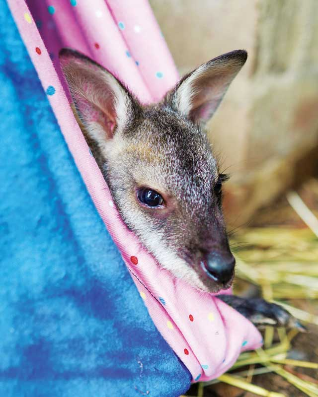 Taking care of Australia's exotic species turned out to be quite similar to treating any other animal.