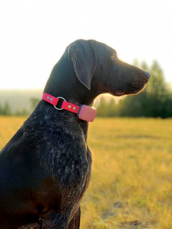 Technology that helps a pet's activity tracker detect when a dog is scratching, sleeping, eating, drinking, or running provides invaluable data in that it can alert owners and veterinarians about any significant changes in these behaviors. Photo courtesy Aletha Carson