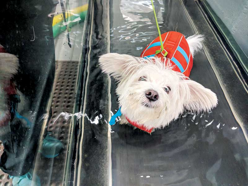 After the initial start-up, slow acquisition of more costly equipment, such as an underwater treadmill, will increase revenue as well as patient outcomes. Photo courtesy Two Hands Four Paws
