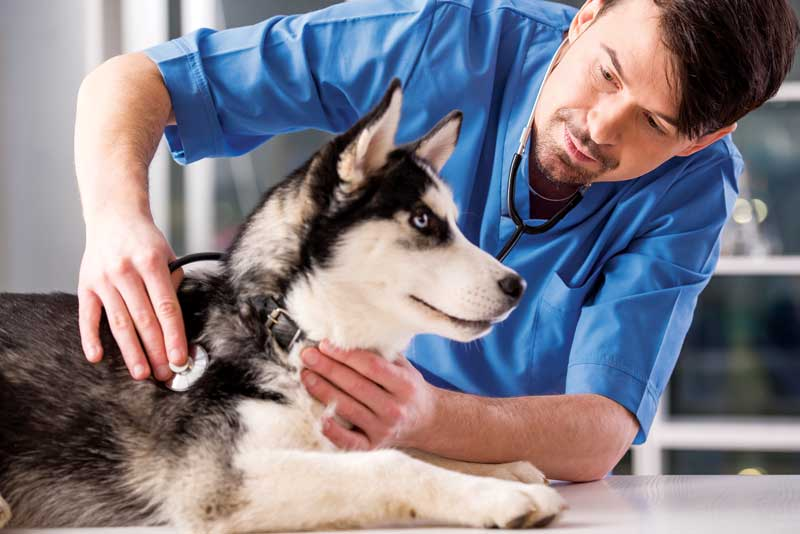 Pet owners are more likely to comply with the recommendation of preventive diagnostics whey they understand the importance of establishing a baseline to compare results from year to year.