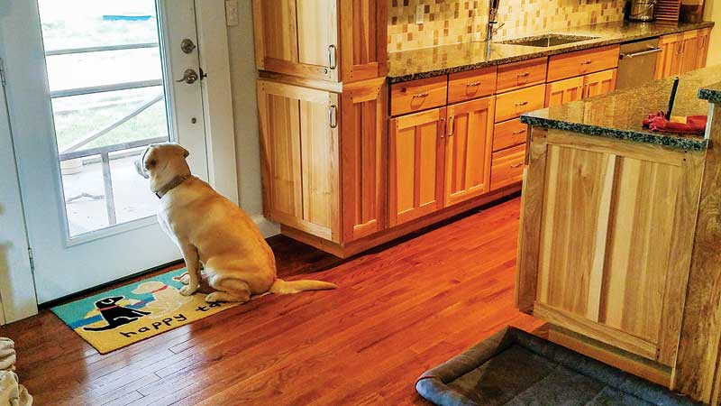 Encourage pet owners to set up a camera so you can see how the dog reacts once they leave the house. Ensure clients know they need to get in the car and drive away for a realistic view of how their dog behaves when they depart.<br><i> Photos courtesy Valarie Tynes