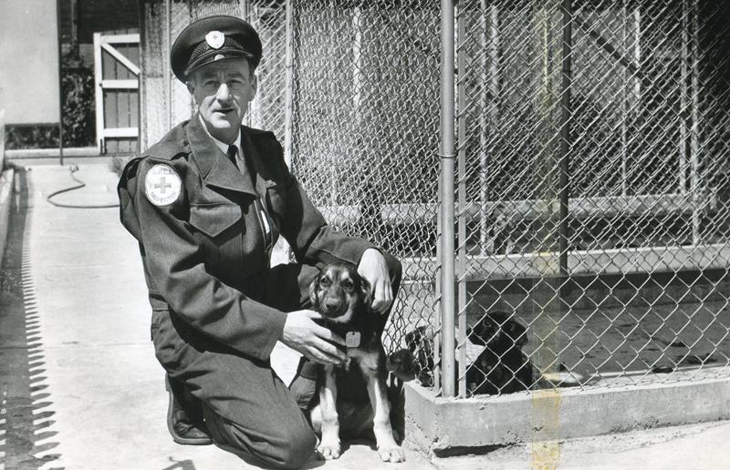 Photos courtesy B.C. SPCA