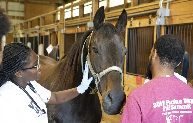 Purdue was praised for its initiatives to provide opportunities for equity-minded individuals from disadvantaged backgrounds to enter the veterinary profession.