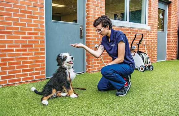 With social distancing and the nature of pet and veterinary relationships top of our minds, animal hospitals, clinics, and shelters should adjust their spaces to accommodate necessary precautionary measures for public and animal health safety.
