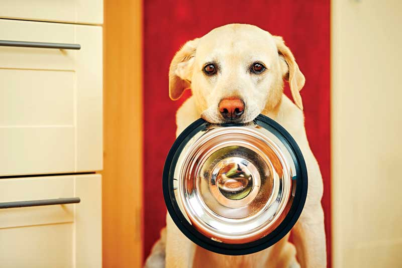 Veterinary nutritionists are often a secret ingredient for pet health