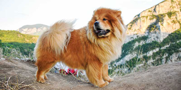 Canine diabetes: When one size doesn't fit all
