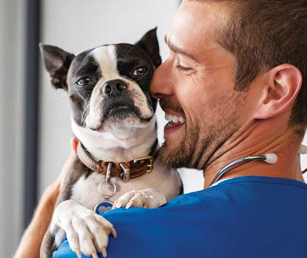 One of the most frustrating myths is veterinarians can't be trusted to guide pet owners in making feeding choices due to lack of nutrition education and the influence of makers of the pet food stocked by a clinic.