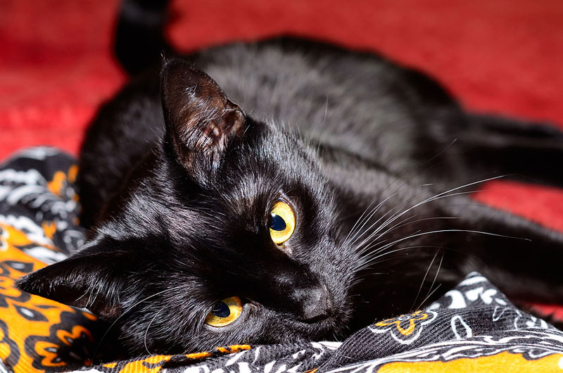 Feline friendship might have a positive effect on children with autism spectrum disorder (ASD) and their families.