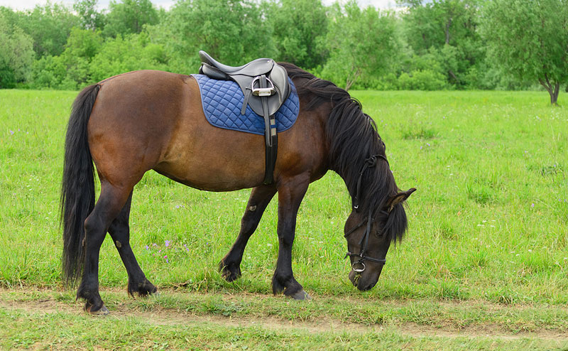 Equine-assisted therapy (EAT) and its effect on adults diagnosed with Parkinson's disease (PD) is set to be explored in a new research project, funded by the Human Animal Bond Research Institute (HABRI). Photo ©BigStockPhoto.com
